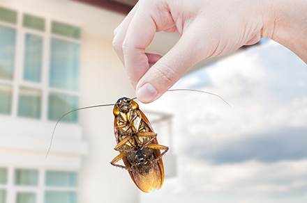 Holding a cockroach by its antenna