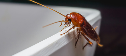 A Cockroach climbing up the side of a tub